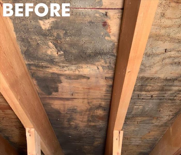 A Plymouth homeowner's attic before mold remediation
