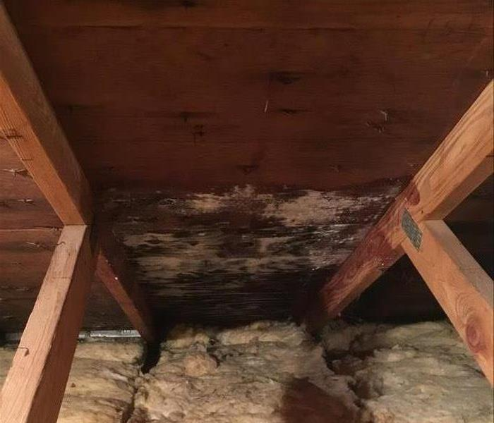 Attic Mold in a Plymouth Home Before