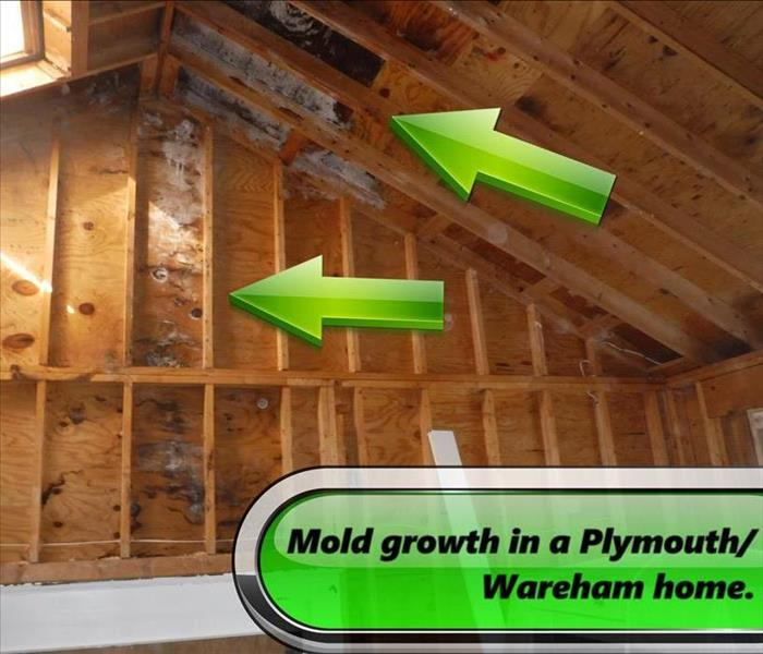 Mold Remediation Conditions in Plymouth/Wareham Might Be Right for Mold