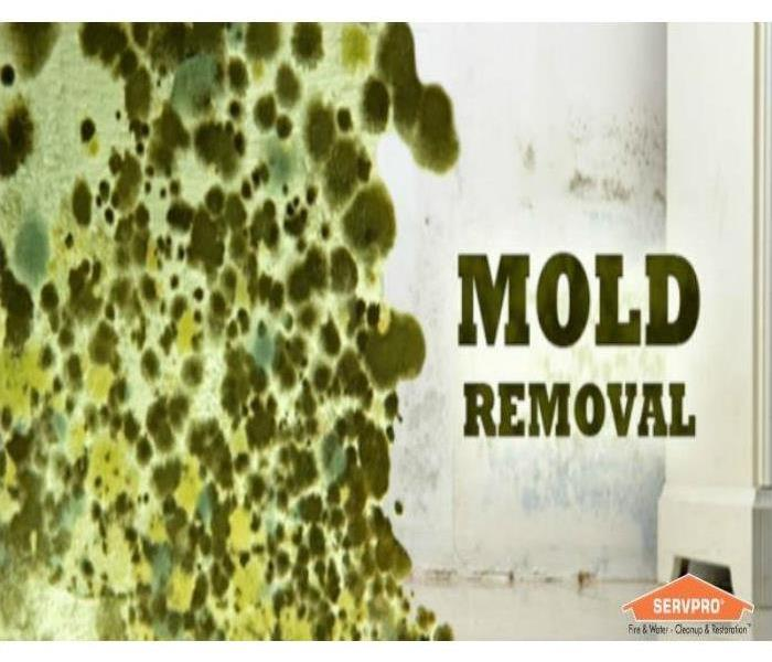 Mold Remediation Does Your Plymouth/Wareham Home Have A Mold Problem?
